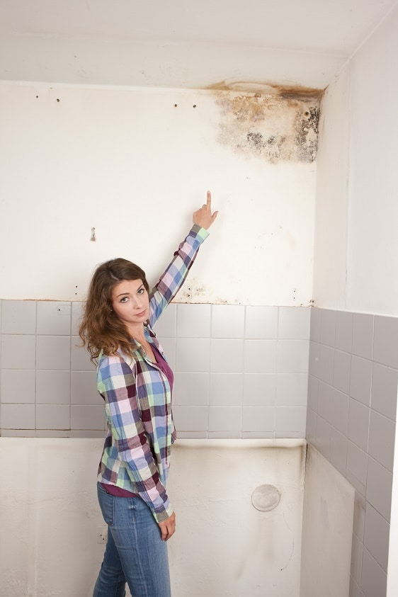 mold remediation services in Coralville, Iowa