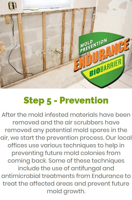Step 5 Mold Disinfection and Prevention